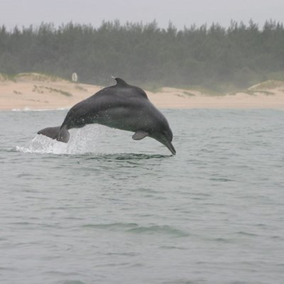 Dolphin identification gets algorithm boost