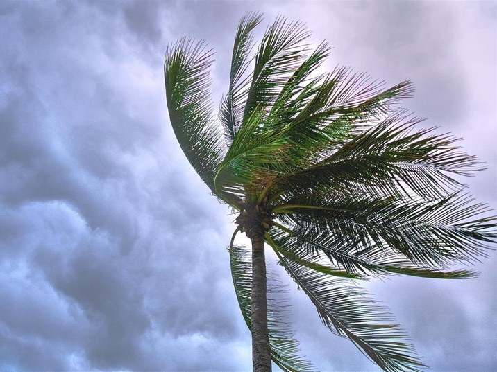 Weather warning: Strong wind expected