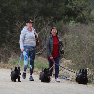 Oudtshoorn Dogs in Need dog show