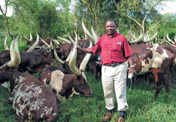 Ramaphosa Retrenches Almost Half The Staff At His Farm Oudtshoorn Courant