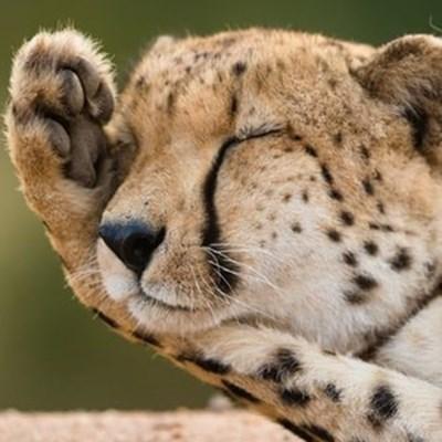 SA wildlife tourism hard-hit by coronavirus