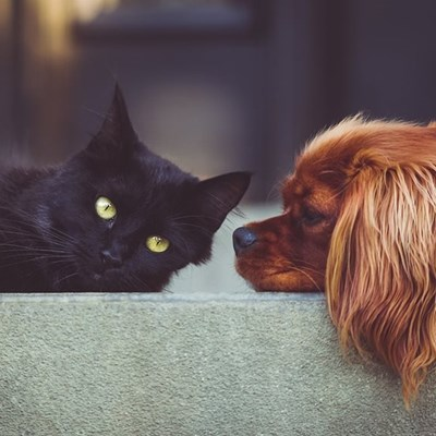 Simple ways to take care of your pet's dental health