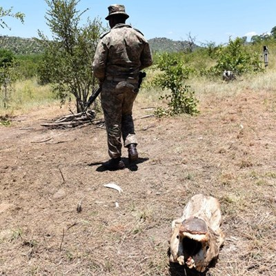 SANParks criticised after tourists find employee, man harvesting black rhino horn
