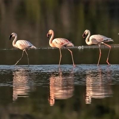 Enjoy life, flamingo style
