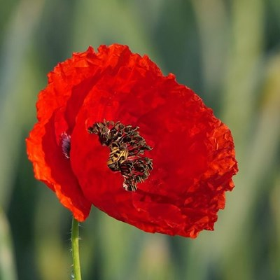 Remembering those who gave their lives in war