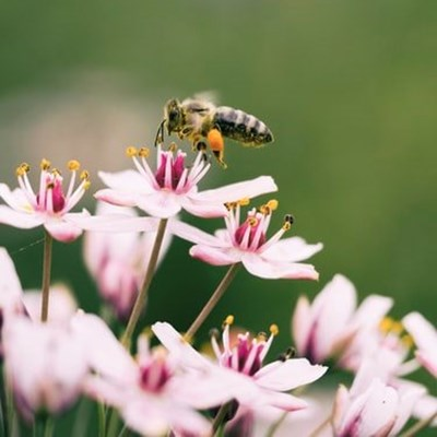Plant flowers on World Bee Day