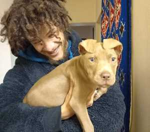Pit bull puppy safe and sound