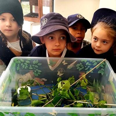 Science Week inspires learners