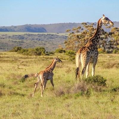 A family safari adventure at Shamwari Private Game Reserve