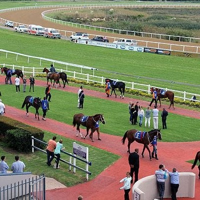 Charges laid after protesters attack racehorses in PE, kill one