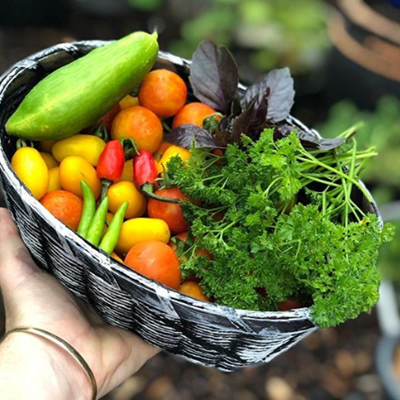 Get ready for a 2nd wave of summer veggies