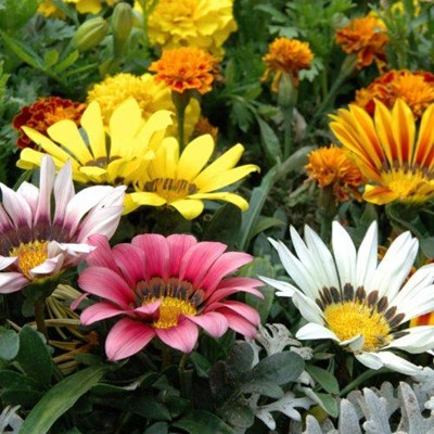 Cheerful spring seedlings to add colour to your garden