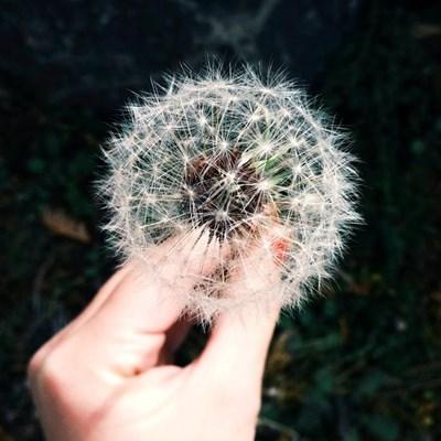 Intense allergy season predicted amid Covid-19