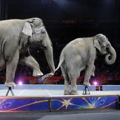 Locals take a stand against circus