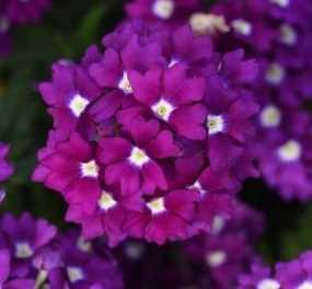 Prune and plan your summer garden