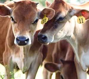Stock theft: New strategy needed