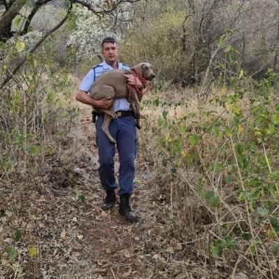 Hartbeespoort colonel climbs mountain to save dog