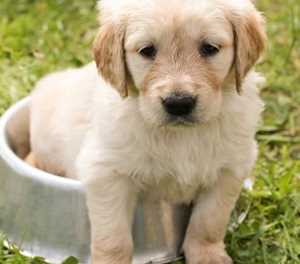Six steps to surviving the first night with a new puppy or kitten