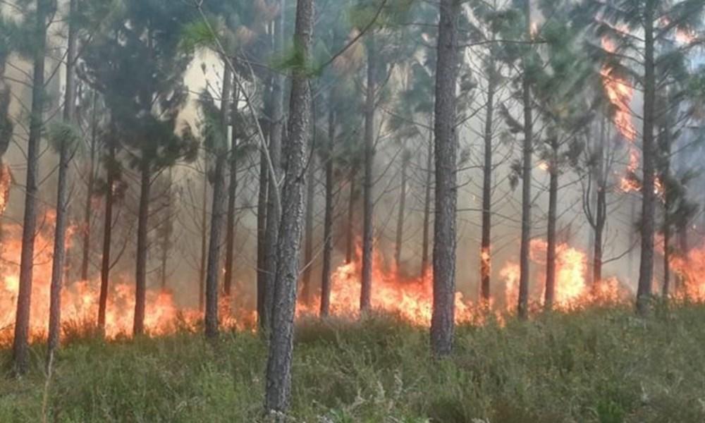 Beheerde brand raak buite beheer
