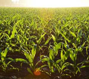 'Opportunity for SA to increase grain exports to Zimbabwe'