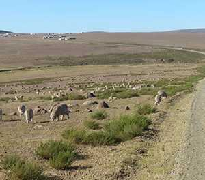 Eastern Cape to launch stock theft prevention forum