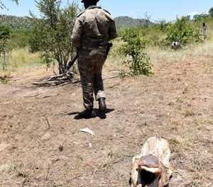SANParks explains decision to rotate anti-poaching rangers