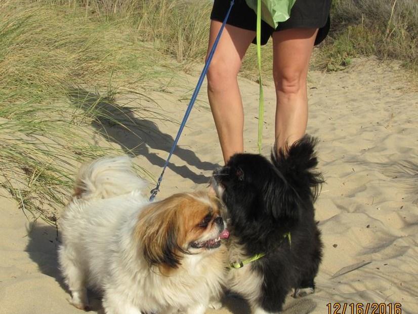Don't miss doggie walk