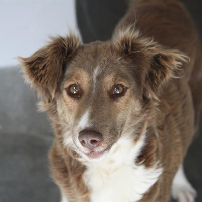 SPCA pets available for adoption