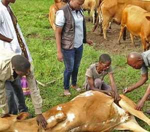 SA farmers urged to be vigilant against anthrax