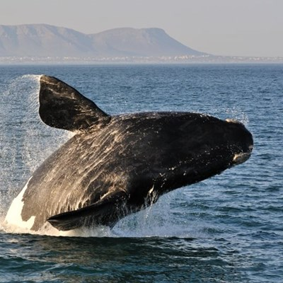 Best whale watching spots in South Africa