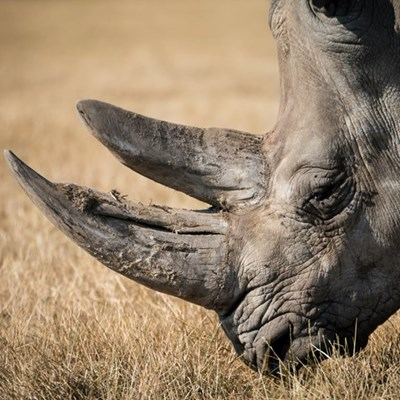 3 black rhinos killed in two separate incidents in Lephalale, Gravelotte