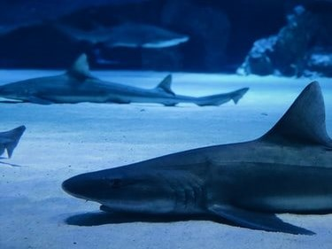 Warning: hefty penalties for catching sharks illegally