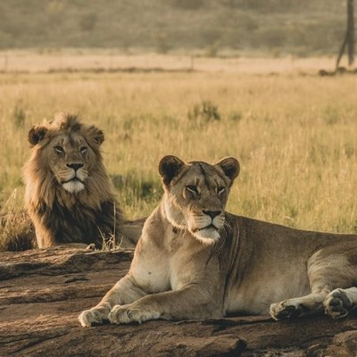 SANParks welcomes report on wildlife management