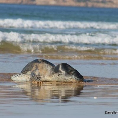 Rare creature visits Plett's shore