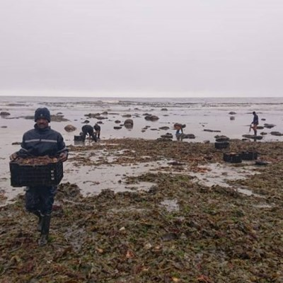 Coastal communities urged not to collect dead fish