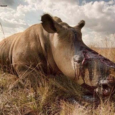 Kruger Park ranger single-handedly apprehends gang of rhino poachers