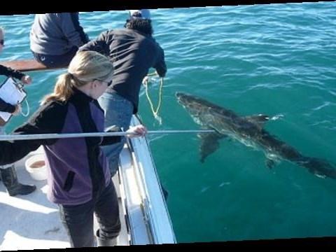 Local sharks: Dangerous or in danger?