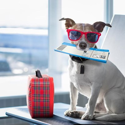 Now you can fly with your dog…