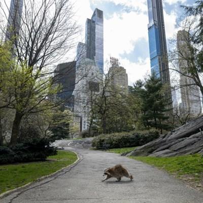 Central Park, the calm amid New York's coronavirus storm