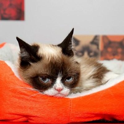 Grumpy Cat dead at 7