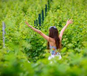 One vine day: Thai wine sisters take aim at booze monopoly