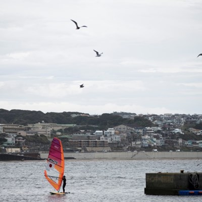 World sailing 'disappointed' over Japan dolphin show