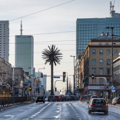 Warsaw's lone palm tree comes of age