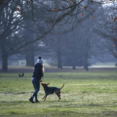 Pandemic pet demand blamed for surge in UK dog thefts