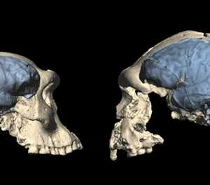 Mind blown: Modern brains evolved much more recently than thought