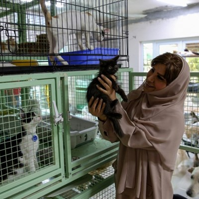 Mus-cats: Omani woman juggles 500 felines