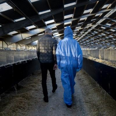 Denmark to pay billions over virus shutdown of mink industry