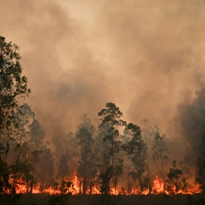 Rally Australia cancelled because of raging bushfires
