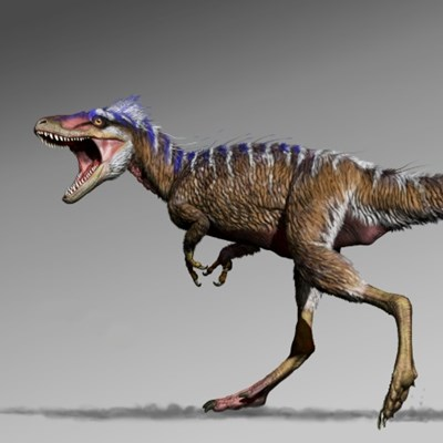 Tiny T-rex sheds light on prime dino predators