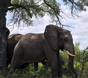 Protests at Joburg zoo over widowed elephant